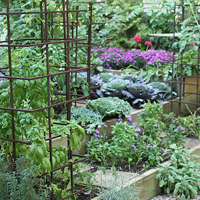Home Vegetable Garden Ideas In Sri Lanka 1
